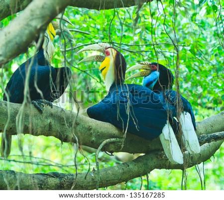 Great hornbill - stock photo