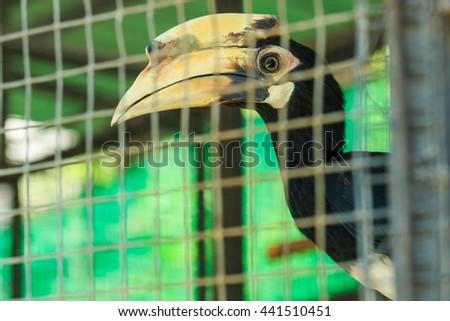 Great hornbill, Great indian hornbill, Great pied hornbill,bird,animal, wildlife - stock photo