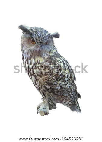 Great Horned Owl, Bubo Virginianus Subarcticus, isolated over white background - stock photo