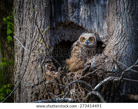 owl tree stock images royalty free images vectors