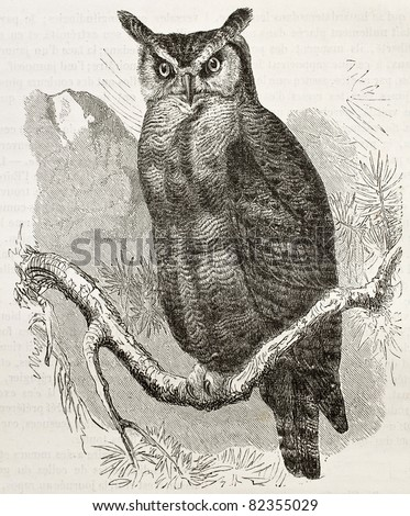 Great Horned-owl old illustration (Bubo virginianus), also known as Tiger Owl. Created by Kretschmer and Jahrmargt, published on Merveilles de la Nature, Bailliere et fils, Paris, 1878 - stock photo