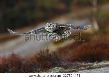 Great horned owl on air - stock photo