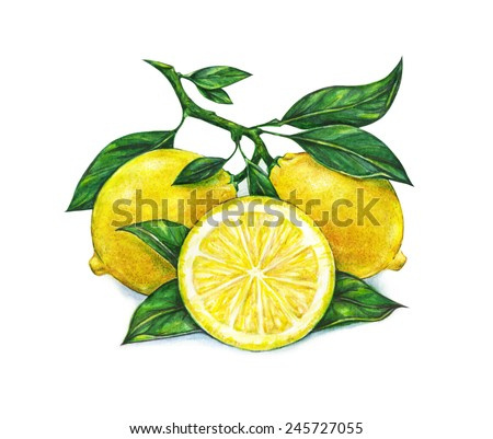 Great illustration of beautiful yellow lemon fruits isolated on white background. Water color drawing of lemon - stock photo