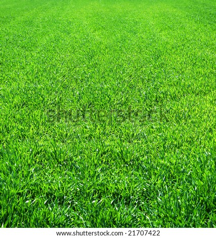 Great image of a nice green field of grass - stock photo