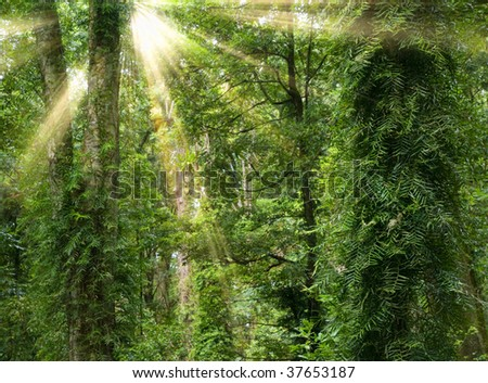 great image of light rays in the rain forest