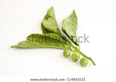 great morinda, Indian mulberry, beach mulberry, Tahitian noni, noni, nono, meng kudu, nonu, ach (Morinda citrifolia) - stock photo