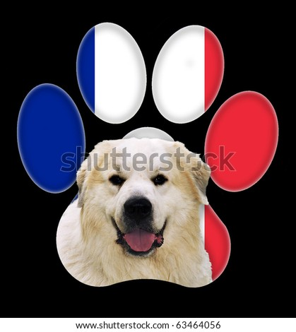 Great Pyrenees dog portrait with a background of France flag in paw print - stock photo