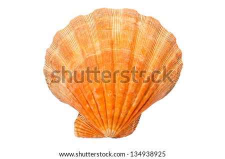 Great Scallop seashell on white background - stock photo