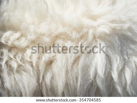 great sheep wool texture - stock photo