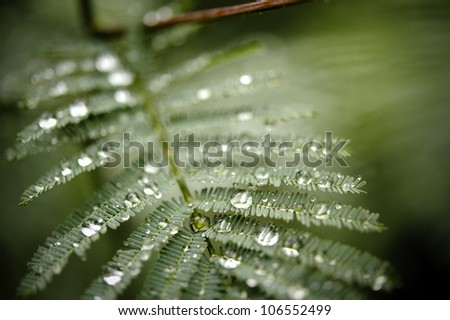 Great shot for environmental concept. Drops after the rain in the forest - stock photo