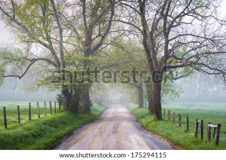 Great Smoky Mountains National Park Cades Cove Foggy Country Road in early morning during the spring season dogwood bloom