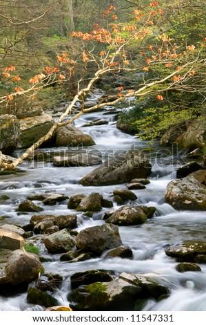 Great Smoky Mountains National Park Springtime River Vertical - stock photo