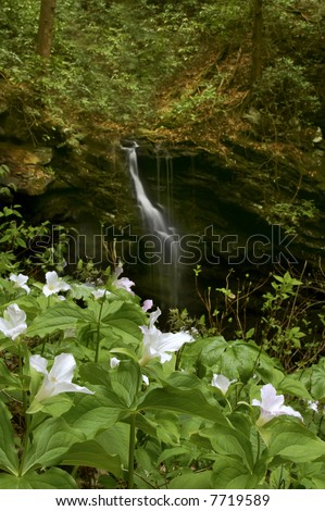 Great Smoky Mountains White Oak Sinks Waterfall with Trillium in Foreground Vertical - stock photo