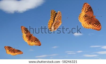 Great Spangled Fritillary butterflies. - stock photo