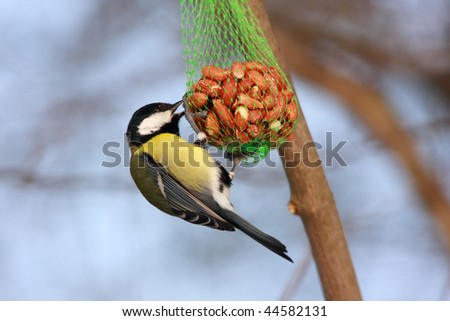 great tit and bird food - stock photo