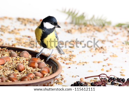 great tit at the feeding table - stock photo