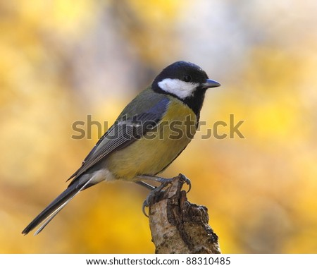 Great tit on a trunk in autumn - stock photo