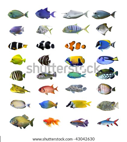 Great tropical fish collection on white background - stock photo