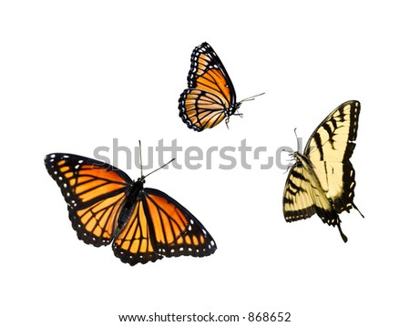 great value, 3 for 1, isolated butterfly collection - stock photo