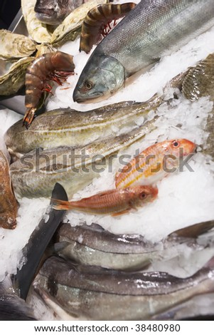 Great variety of fish and seafood on fish market ice display - stock photo
