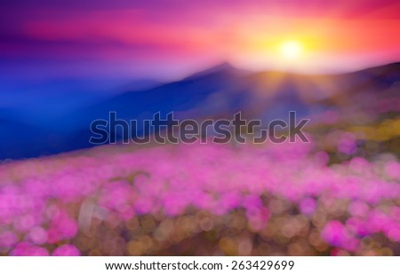 Great view of the magic pink rhododendron flowers. Retro filtered. Beauty world. Natural blurred background. Soft light effect.  - stock photo