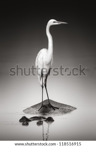 Great white egret on Hippopotamus (Artistic processing) - stock photo