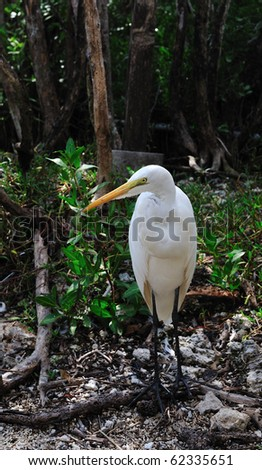 Great White heron - stock photo