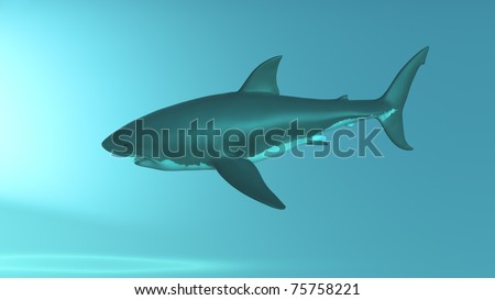 Great White Shark, from front