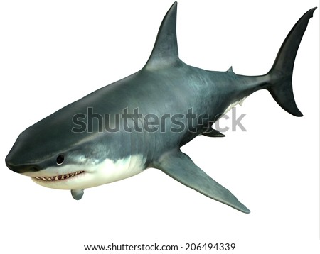 Great White Shark Upper - The Great White Shark is an apex-predator which can grow over 26 feet or 8 meters and live for 70 years or more. - stock photo