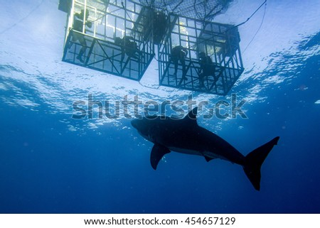 Great White shark while coming to attack you on deep blue ocean background - stock photo