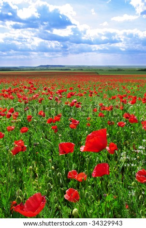 Greatest poppies meadow. Nature composition.