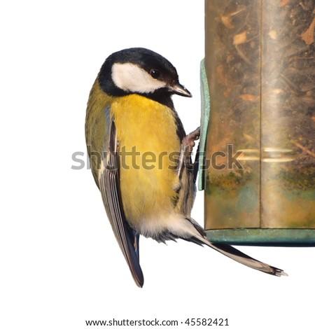 Greattit bird on feeder isolated on white - stock photo