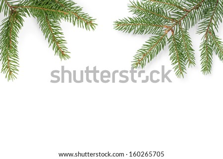 gree spruce twig composition, on white background - stock photo