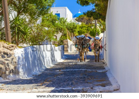 Greece famous santorini island in Cyclades, donkey in the street - stock photo
