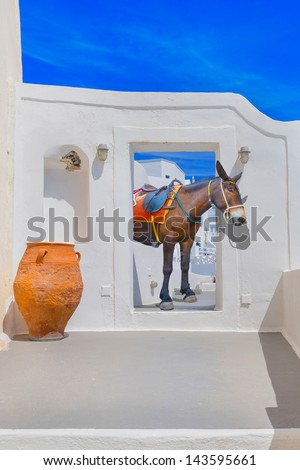 Greece famous santorini island in Cyclades, donkey looking threw a door frame - stock photo
