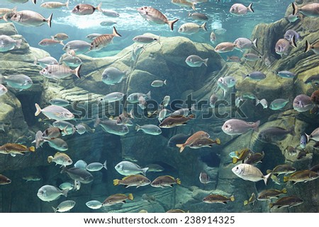 Greece, Gournes. Underwater world of the Mediterranean Sea in the aquarium of Crete - stock photo