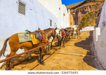 Greece santorini island donkeys - stock photo