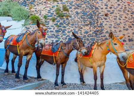 Greece Santorini island in Cyclades donkeys of the islands are used to transport tourists in summer time - stock photo