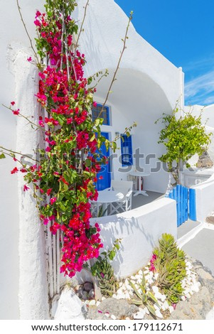 Greece Santorini island in cyclades traditional view of colorful bougainvillea flowers  in thira by narrow whitewashed walk paths at summer during daylight