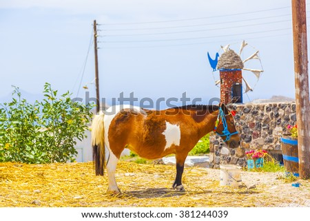 Greece Santorini, pony that transport tourists - stock photo