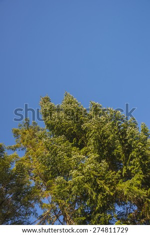 Greece, Valia kalda trees in forest - stock photo
