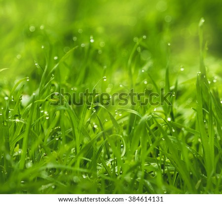 Greed grass in a dew. Close up shot with selective focus and beautiful natural bokeh. Green grass with waterdrops.