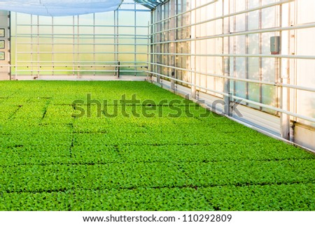 greehouse with plants - stock photo