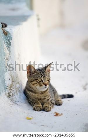 Greek cat - stock photo