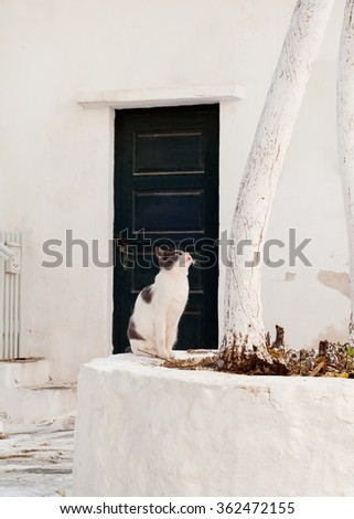 Greek cats - a cat sitting near the tree at the entrance to the house