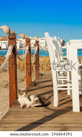 Greek cats - cat lying near the table in the restaurant on the background of the sea and Mykonos Chora - stock photo