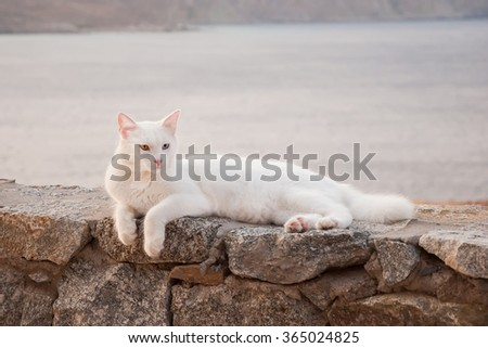 Greek cats - Nice white fluffy cat with beautiful eyes on the stone in the garden. - stock photo