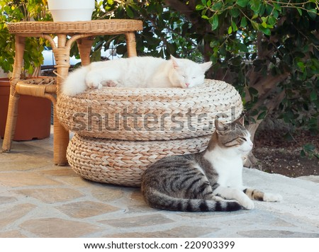Greek cats - two cats sit on the ground in the yard. - stock photo