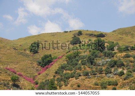 Greek Countryside Flowers - stock photo
