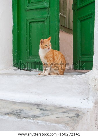 Greek males - beautiful cat sitting on the stairs at the entrance to the house - stock photo